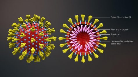 Photo found on WikimediaComons  Here is a diagram portraying the structure of a virus